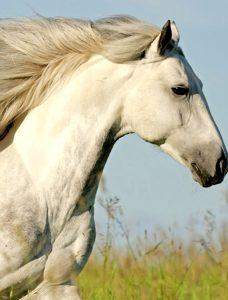 la-peau-du-cheval
